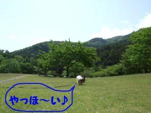 2009514-1.jpg