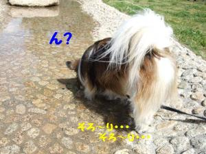 2009514-30.jpg