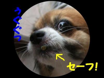 2009521-10.jpg