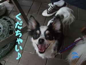 2009521-5.jpg