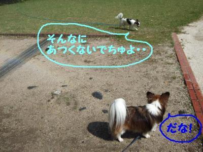 2009523-12.jpg