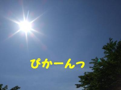 2009523-1.jpg