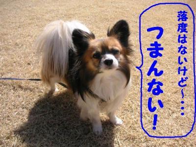 2009arigatou5.jpg