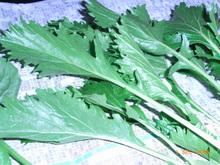 仙台雪菜2