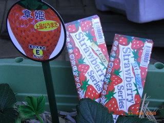 イチゴのタグ