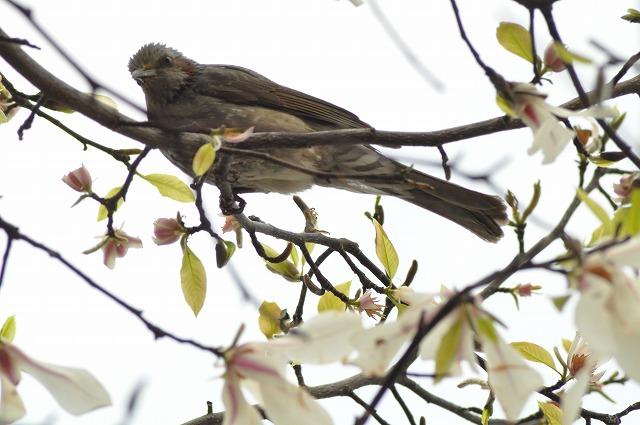 桜 128