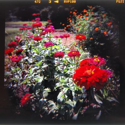 P2278419_R+.jpg