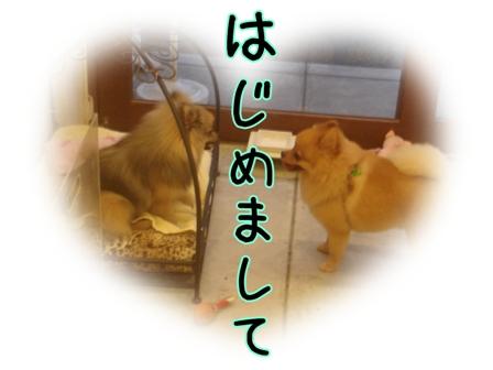 DSC07417.jpg