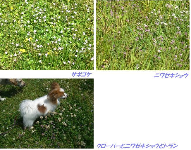 CIMG0071w.jpg