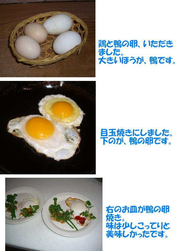 CIMG8477w.jpg