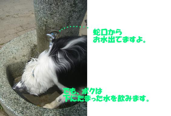 CIMG9762b.jpg