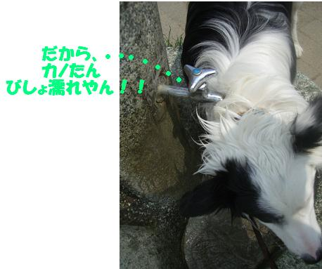 CIMG9763b.jpg