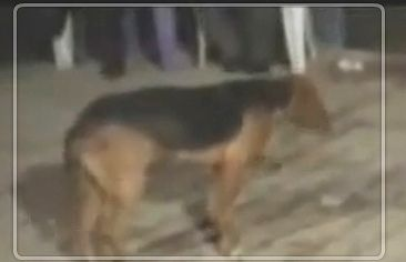 Dancing_dog.jpg