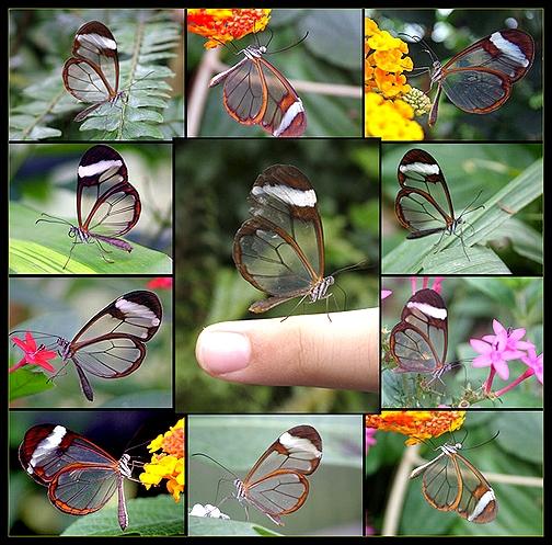 transparent-butterflies.jpg