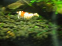 ママ逃げる