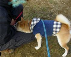 sakura-chan_owner.jpg