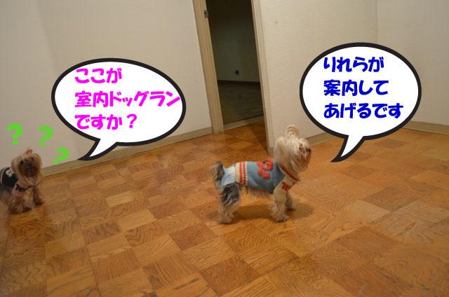 01_20111230015345.jpg
