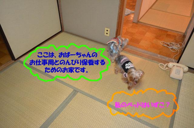 03_20111230015344.jpg