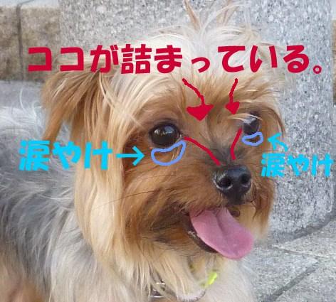 09_20110910020401.jpg