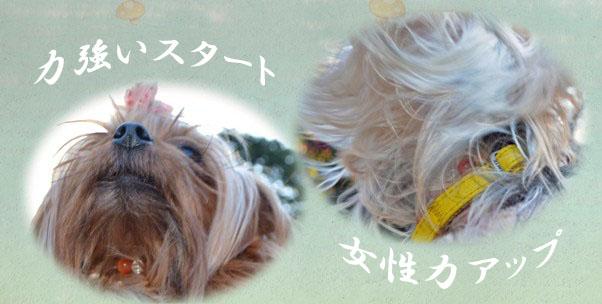 11_20111207124712.jpg
