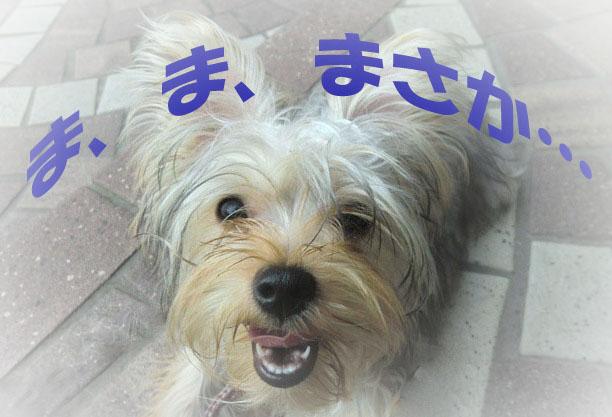 12_20110910020400.jpg