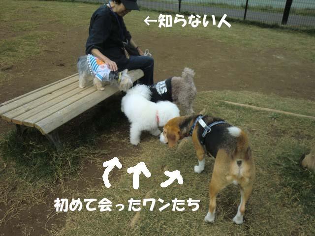 12_20111026022517.jpg