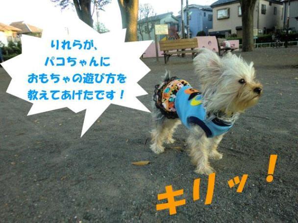 14_20111114031109.jpg