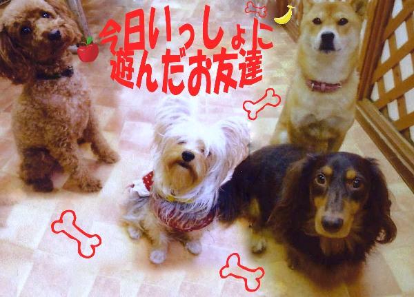 1_20111120051121.jpg