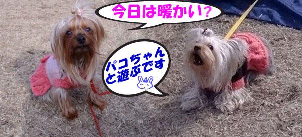1_20120226082947.jpg