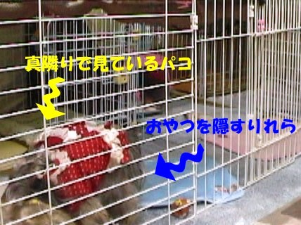 お留守番 (5)