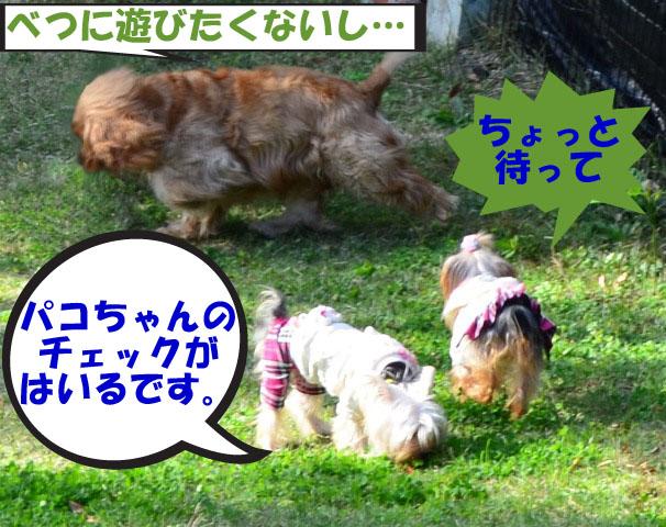 2_20111127171035.jpg