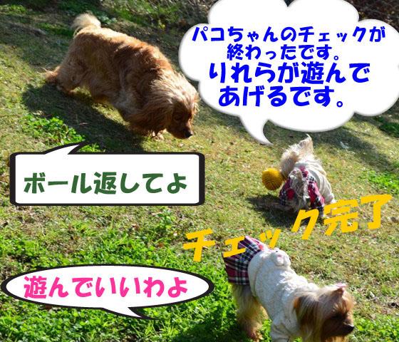 3_20111127171035.jpg