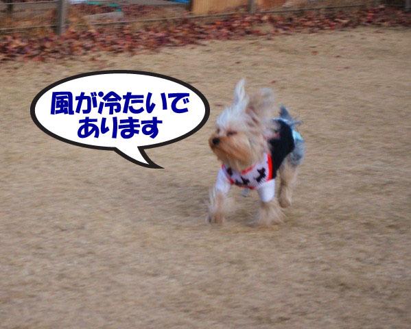 3_20111224080203.jpg