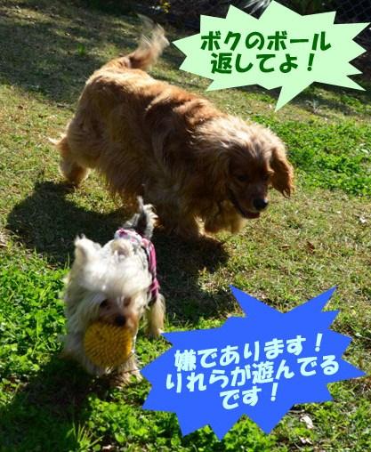 4_20111127171035.jpg