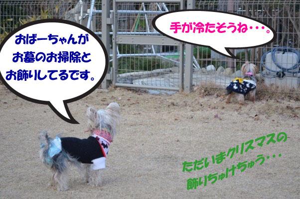 4_20111224080203.jpg