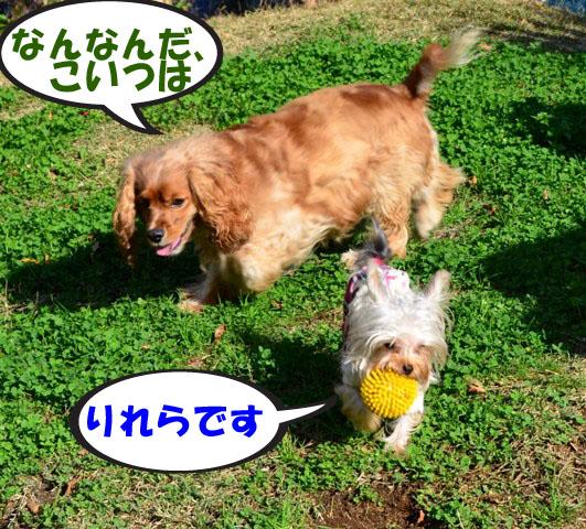 5_20111127171035.jpg