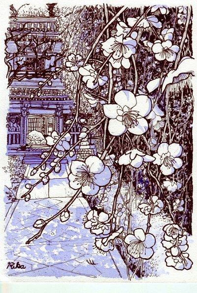 高津の枝垂れ梅