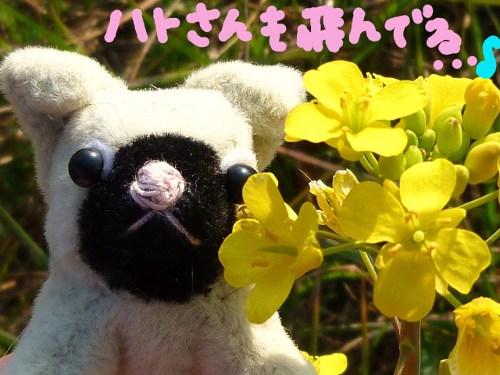 春の日差しの中で3☆