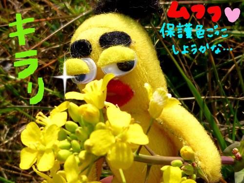 春の日差しの中で4☆
