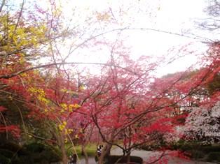 春色グラデーション