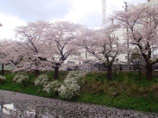 桜山さくら