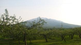 りんごの花と岩木山