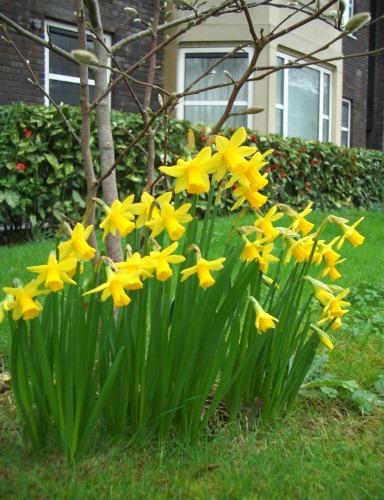 花盛りの黄色いお花