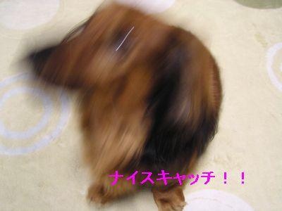 らぼ0309no11
