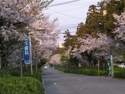 健軍神社参道
