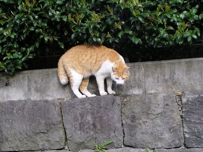 090417猫