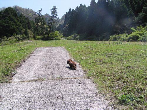 20090419 高森殿の杉2