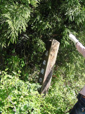 20090419 高森殿の杉3