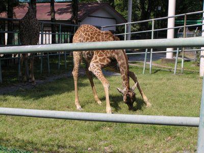 210509 動物園15