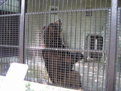 210509 動物園7